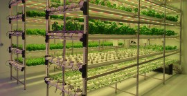 Emergence of Vertical Farming